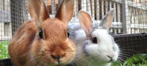 SpringBabies_BunnyB_v1