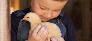 SpringBabies_ChickB_v1